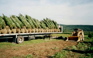 Christmas Trees on a truck