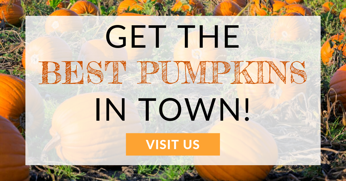 October Email - Find the Perfect Pumpkin ? 7