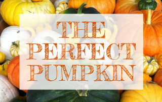 October Email - Find the Perfect Pumpkin ? 5