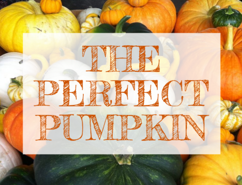 October Email – Find the Perfect Pumpkin ?