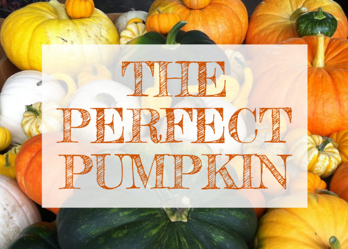 October Email - Find the Perfect Pumpkin 🎃 4