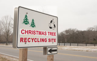 The BEST Way To Recycle Your Christmas Tree 2